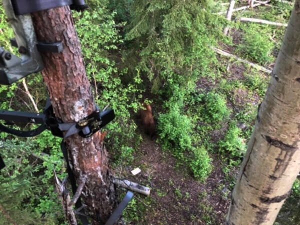 Tree Stand Bear